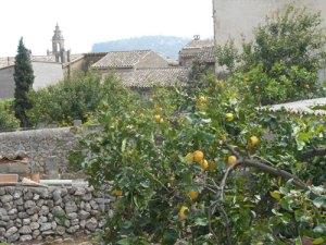 valdeomos-7-lemons109