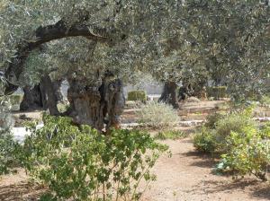 Gethsemane (Medium)